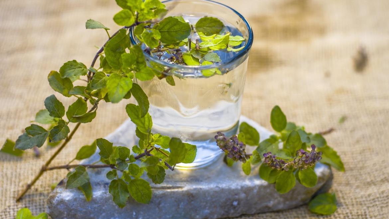 Tulsi: Conociendo a tus aliados herbales